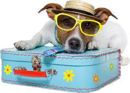 Taking Pets To Spain